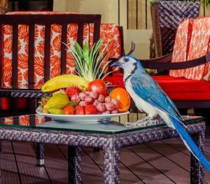 Occidental Papagayo Guanacaste Costa Rica - Lobby
